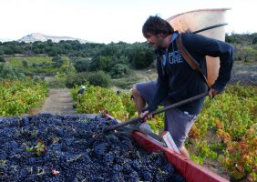 Nico arrange le raisin