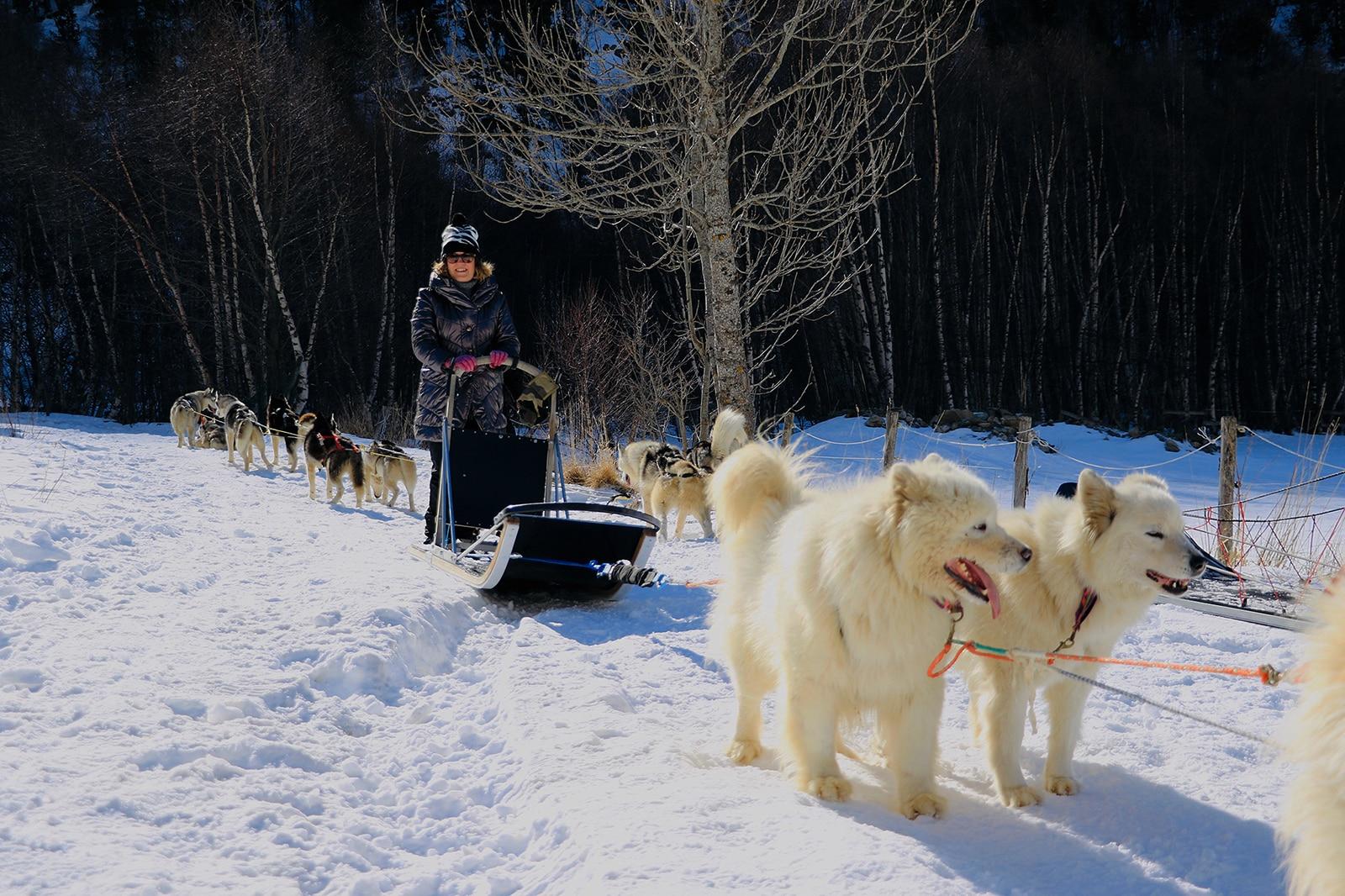 A la rencontre des chiens de traîneau du Cambre
