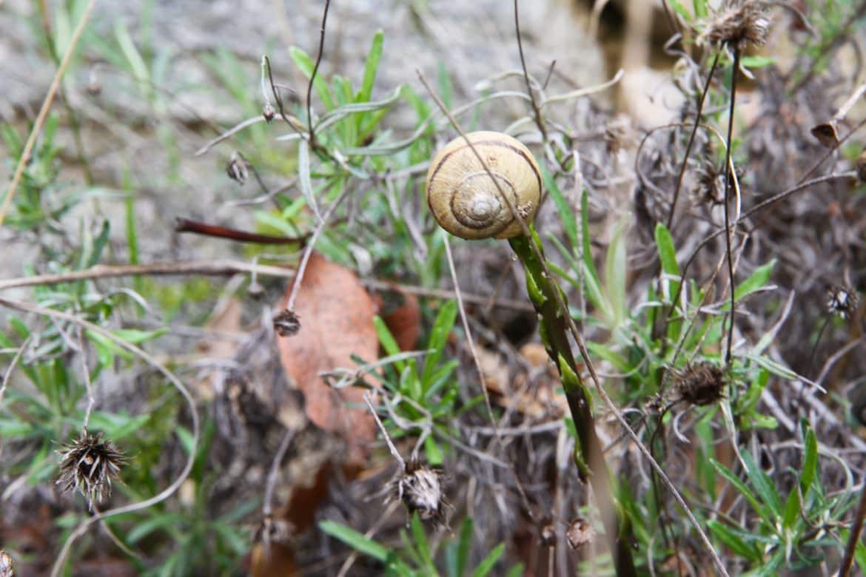 Cueillette d'asperges sauvages