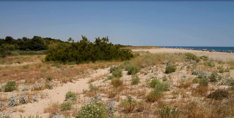 Mas Larrieu Argelès-Sur-Mer