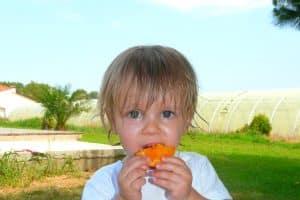 abricots 3